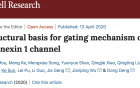 我院邓东团队在Cell Research发表论文揭示 人源Pannexin 1(PANX1)通道蛋白的分子门控机制